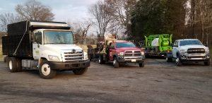 Asheville Tree Service Experts
